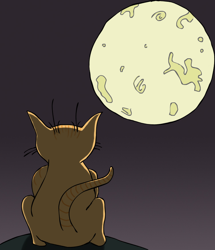 A cat in the moonlight